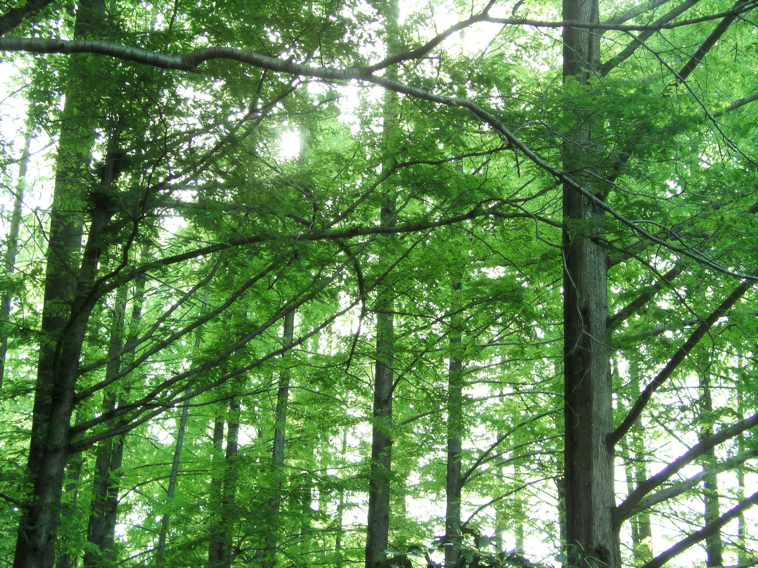 自然を感じる樹木画像